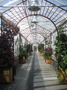 Garten im Juni 08 057